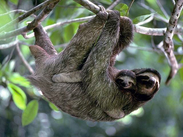 photograph of a a  sloth